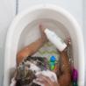 Smiling Kiwi Mild Shampoo | Freshly Cosmetics