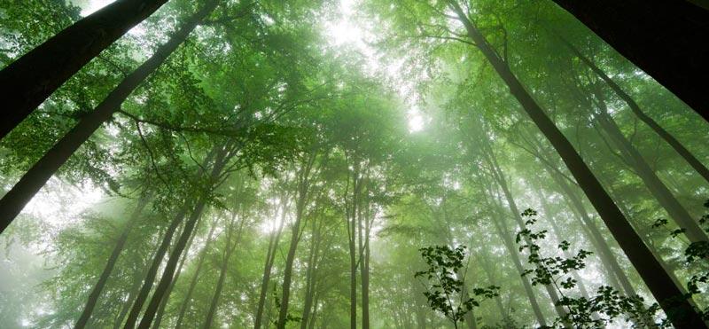 Freshly Cosmetics continúa con el reto de plantar árboles para enfriar el planeta