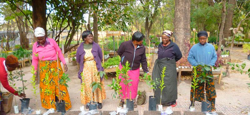 Planting is creating life: el reto de plantar árboles en zonas deforestadas del mundo