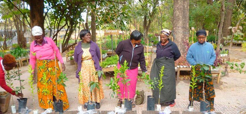 Planting is creating life: el reto de reforestación de Freshly y We Forest