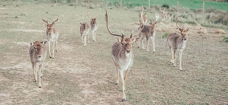 Conoce la Reserva Wild Forest y cómo puedes colaborar